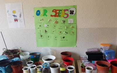Learning about seeds and plants in 2nd of Primary!